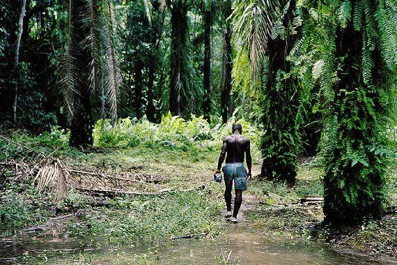 cameroun-biodiversité