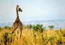Où partir en afrique en février : Le Maroc et l'Afrique du sud