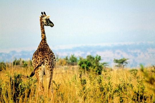 safari-afrique-sud